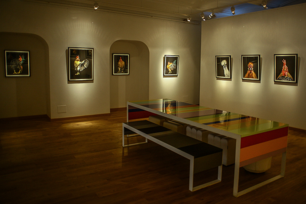 Pebeda Gallery Images_6743